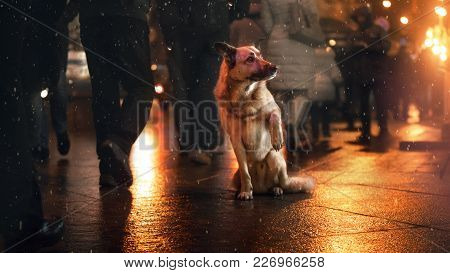 A Stray Dog In The City. Night On The Street. The Indifference Of People