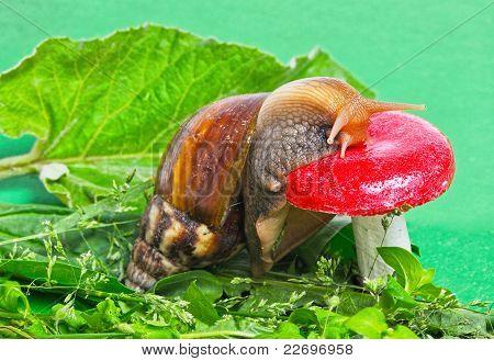 Snail On The Mushroom