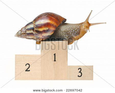 Big Snail On Podium