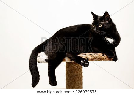 Black Cat Lies On A Cat's Place, White Background.