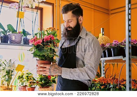 The Bearded Stylish Flower Seller Holds Pink Roses In A Market Shop.