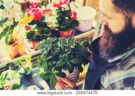 Brutal Bearded Flower Seller With Tattoos On His Arms In A Flower Shop.