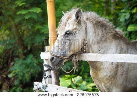 Image Of A White Horse , White Wild Horse