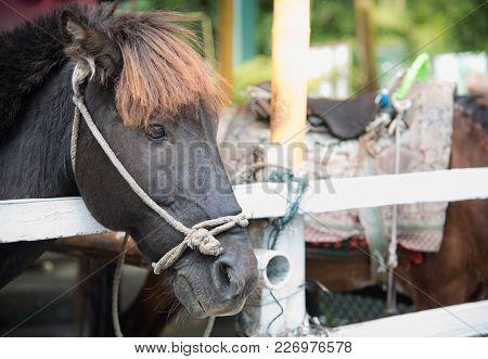 Image Of A  Black Horse , Beautiful Black Horse ,head Of A Black Horse