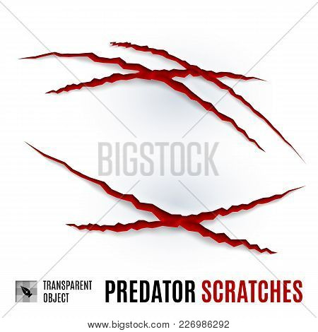 Animal Red Scratches On White Background. Claw Scratch Mark. Paper Claws Animal Scratching. Animal P