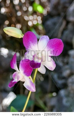 Orchid Flower In Tropical Garden Phalaenopsis Orchid Flowers Growing On Tenerife Canary Islands Orch