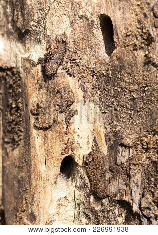 Old Tree Trunk With Bark Beetles . Photo Of An Abstract Texture