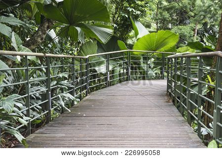 Pedestrian Pathway With Metallic Handrails In Tropical Forest Thicket In Singapore
