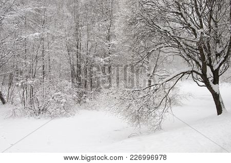 Winter Landscape With A Pond, Sokolniki Park In Moscow, Russia