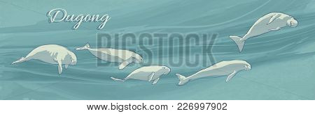 Dugongs Underwater Swimming. Vector Illustration Of Sea Cows On Ocean Current Background. Hand Drawn