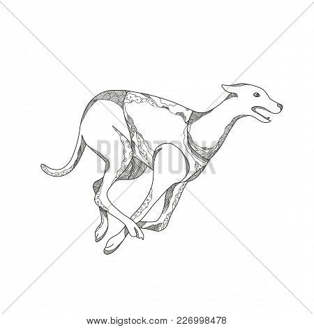 Doodle Art Illustration Of A Greyhound Dog Running Racing Viewed From Side  In Black And White Done
