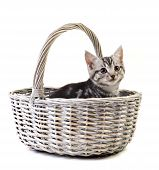 Adorable little kitten in basket on white background with space for text poster