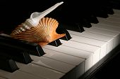 Close up of Piano Keys and seashell. poster