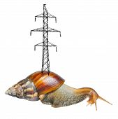 Huge snail with pylon on shell isolated on white background poster