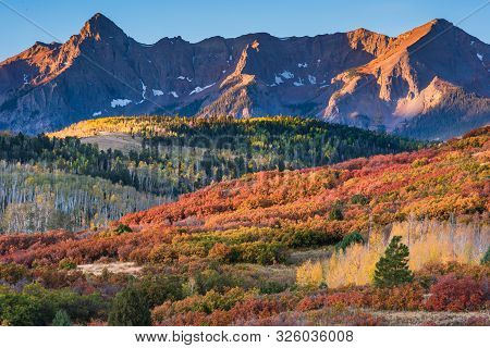 Golden Leaves Of Aspen Trees In A Mountain Forest. Colorado Autumn Scenic Beauty