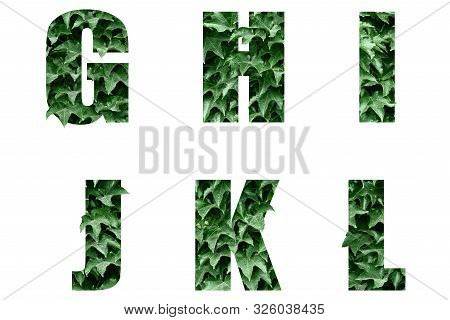 Letters Of The Alphabet G H I J K L Made From Green Leaves.leaf Alphabet.