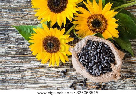 Raw Sunflower Seeds In Burlap Bag On A Wooden Table Against The Background And Yellow Sunflower. Fri