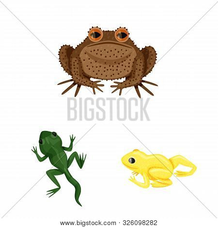 Isolated Object Of Frog And Anuran Sign. Collection Of Frog And Animal Stock Symbol For Web.