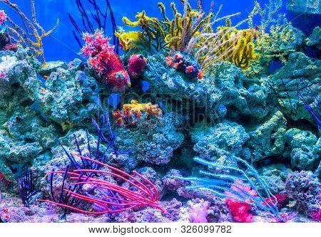 Coral Reef Aquarium Tank For Background. Amazing Colorful Saltwater Aquarium At Home. Beautiful Aqua