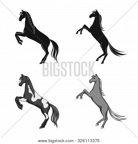 Vector Illustration Of Breed And Equestrian Sign. Set Of Breed And Mare Stock Vector Illustration.
