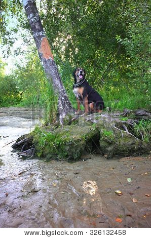 Hunting Dog Sitting And Resting Near The Tree