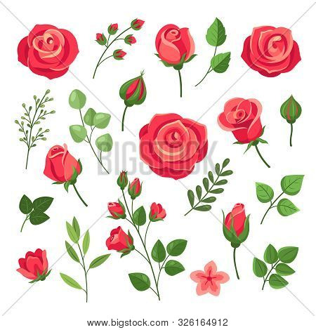 Red Roses. Burgundy Rose Flower Bouquets With Green Leaves And Buds. Watercolor Floral Romantic Deco