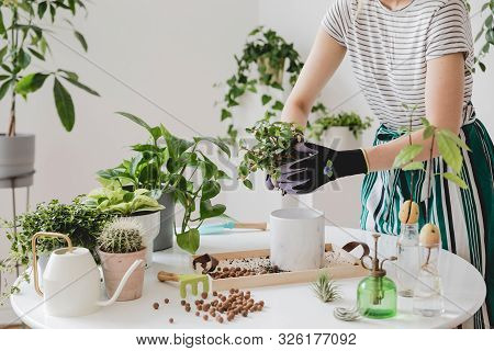 Woman Gardeners Transplanting Plant In Ceramic Pots On The White Wooden Table. Concept Of Home Garde