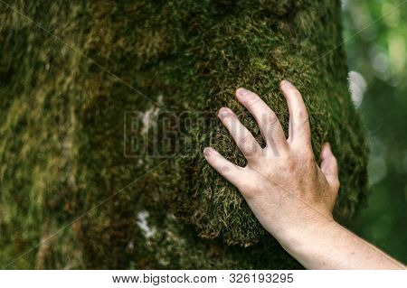 Hand Of Environmentalist Touching Tree Trunk Covered With Moss, Close Up With Selective Focus