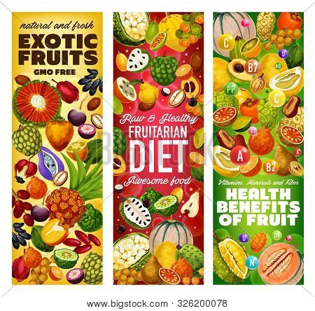 Exotic Fruits Vitamins And Gmo Free Tropical Berries Vector Design Of Fruitarian Diet. Cantaloupe, D
