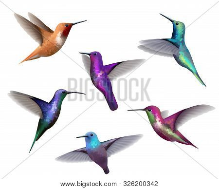 Flying Hummingbirds. Little Colored Birds Exotic Jungle Colored Little Hummingbirds Vector Realistic