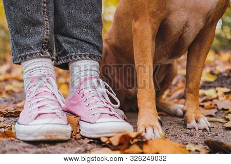 Human and dog's feet among autumn leaves. Close-up shot of sneakers and dog's legs side by side, the concept of companionship, bond between person and pet poster