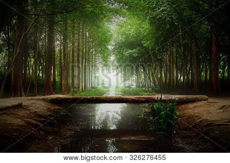 Magical Forest Landscape. Bridge Of Logs Across The Creek.