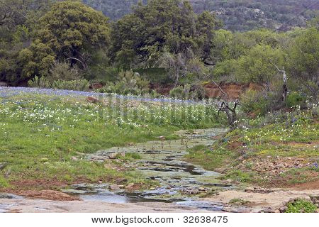 Bluebonnets And A Stream With Hills