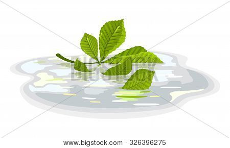 Green Leaves Of Chestnut Floating In Puddle After Rain. Plant Is In Water. Calmness, Tranquillity, B