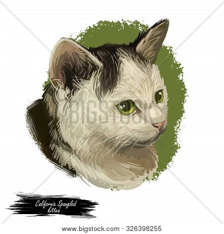 California Spangled Cat Portrait Isolated, Digital Art