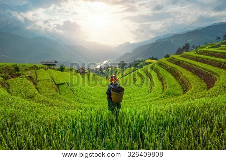 Tribal Woman, Farmer, With Paddy Rice Terraces, Agricultural Fields In Countryside Of Mu Cang Chai,