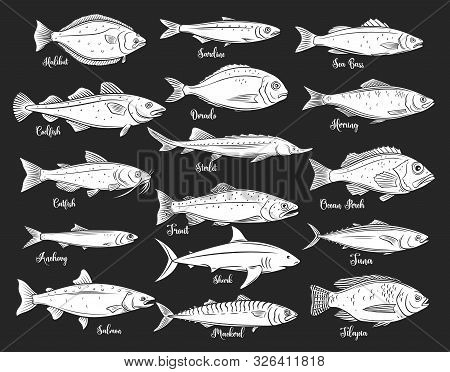 Silhouettes Fish. Isolated Seafood With Bream, Mackerel, Tuna Or Sterlet, Catfish, Codfish And Halib
