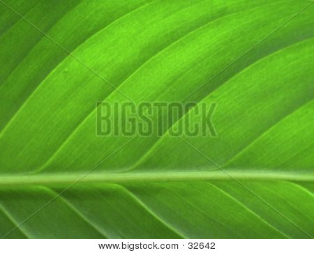 green leaf closeup as a background image poster