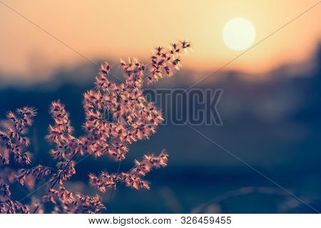 Beautiful Natural Landscape Bright The Field Red Flower Of Tropical Grass Under The Sun And Sunlight