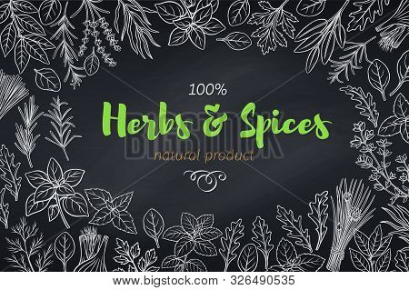 Culinary Herbs And Spice Template, Chalkboard Style. Vector Illustration Seasoning Food Page Design