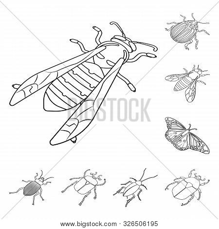 poster of Vector illustration of fauna and entomology icon. Collection of fauna and animal vector icon for stock.