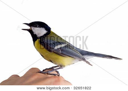 the inspired titmouse
