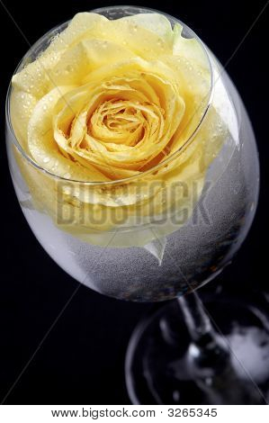 Yellow Rose In The Glass