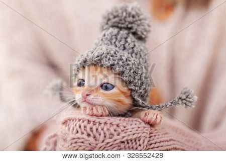 Cute ginger kitten with warm woolen hat prepared for winter. Woman hands holding and protecting adorable small cat  - extreme close up