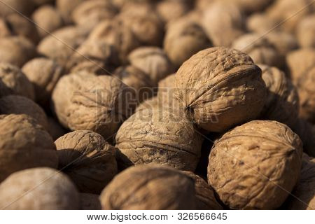 Inshell Walnuts Dried In The Sun, Background. Harvesting. Juglans Regia, The Persian Walnut, English