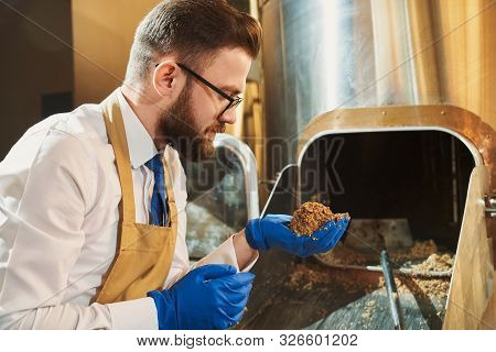 Handsome Brewery Worker In Glasses And Rubber Blue Gloves Holding Milled Malt Grains. Brewery Expert