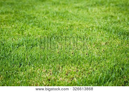 Closeup Of Fresh Bright Green Grass On The Lawn