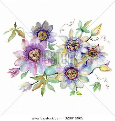 Passiflora Bouquet Floral Botanical Flowers. Watercolor Background Set. Isolated Bouquets Illustrati