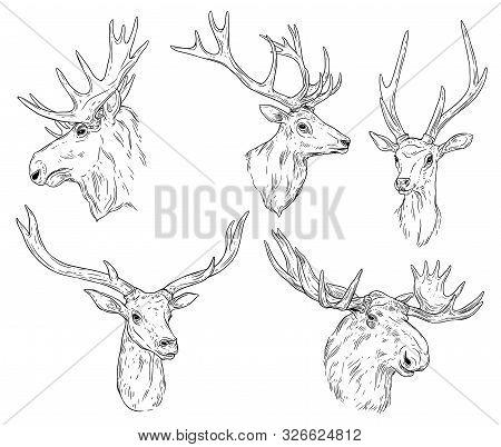 Deer And Elk With Antlers Isolated Monochrome Sketches. Vector Horned Animal, Wild Reindeer Head. Hu
