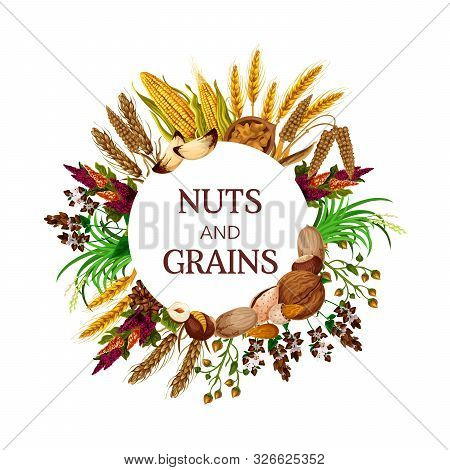 Nuts And Grains, Cereal Food Round Frame. Vector Kernels, Peanut And Pistachio, Corns And Almond, Ha